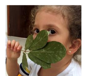 Green Club do Período Integral: Autumn Leaves