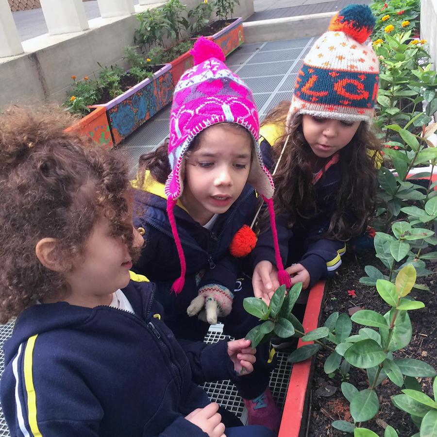 As crianças do Período Integral plantaram belas flores na escola