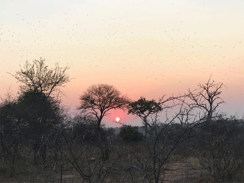 Viagem Africa