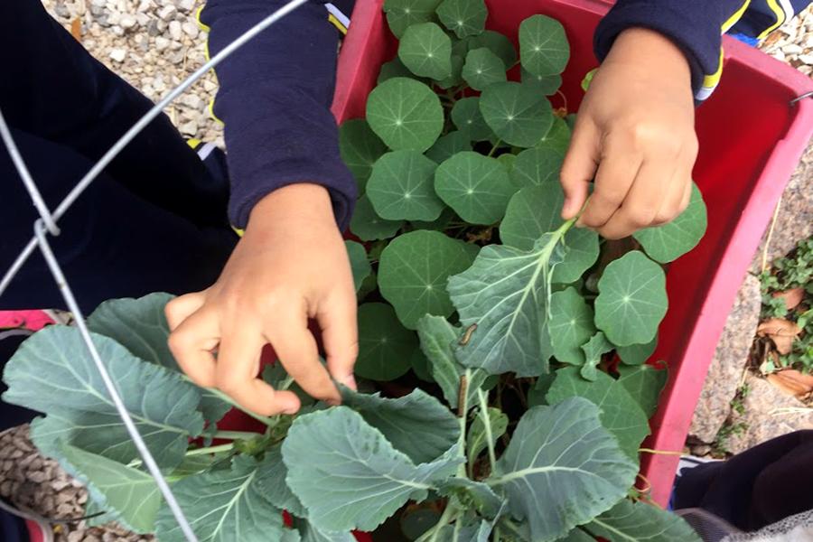 Projeto Dedinho Verde