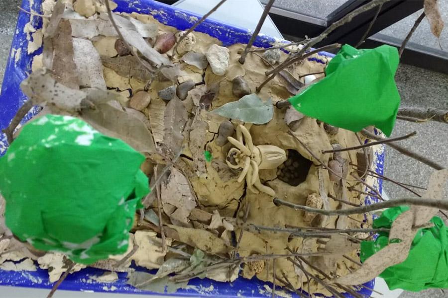 Green Club: crianças aprendem sobre os animais com veneno