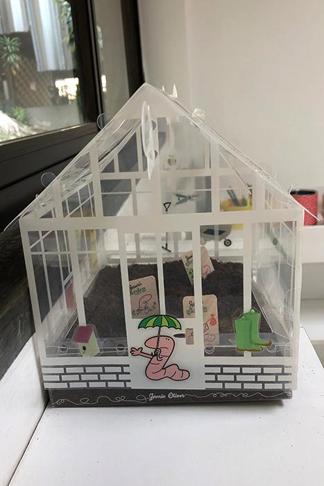 Projeto mini greenhouse: plantar, cuidar, esperar e colher
