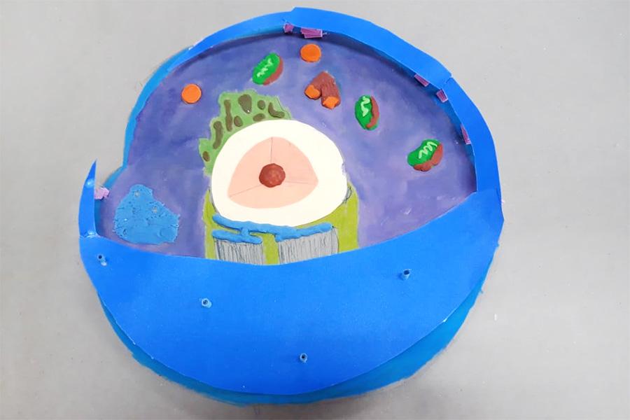Biologia: alunos fazem representações de organelas no espaço maker